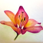Mom's Lily